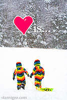 Love is.... photo of two little friends sledding on a snowy afternoon on Sled Hill in Woodstock,NY by Star Nigro. Had fun photoshopping this piece with the additions of the heart and text.<br /> <br /> <br /> <br /> © 2019 All artwork is the property of STAR NIGRO.  Reproduction is strictly prohibited.