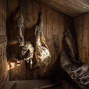 100 year old seal carcasses used for food and fuel