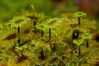 Moss details.<br />