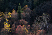 Autumn in the Uinta-Wasatch-Cache National Forest, Northern Utah.