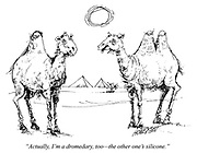 """Actually, I'm a dromedary, too - the other one's silicone."""