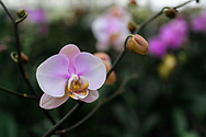 A picture I took at a local orchid greenhouse called Fantasy Orchids Inc.