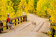 Woman and Australian Shepherd dogs in San Juan National Forest, Colorado, <br /> Model Released, <br /> Property Released
