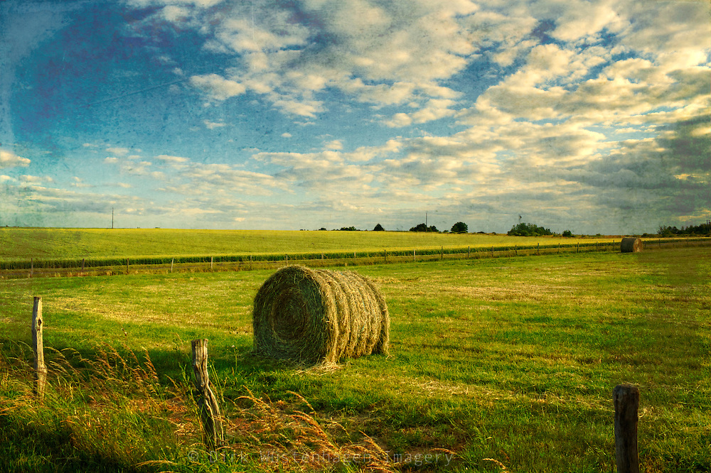 Haybale on a meadow