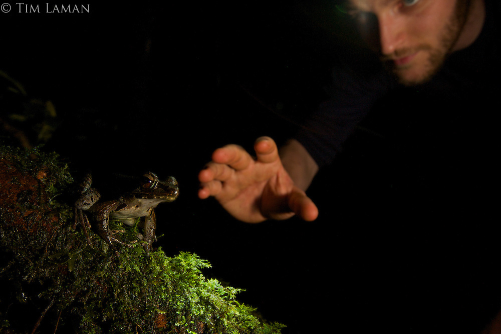 Foja Mountains RAP Expedition herpetologist Paul Oliver captureing a frog (Rana sp.)