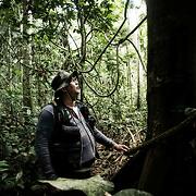 Liane qui permet appel le gibier. Enseignements de Nilson Mendes dans forêt primaire du Seringal Cacohoeira