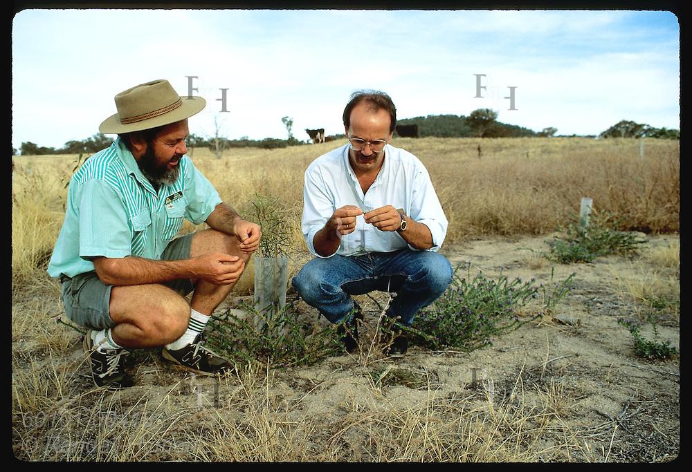 Monsanto rep Zel Bodulovic examine seedlings planted by Greening Australia's rep, Dick Green; NSW Australia