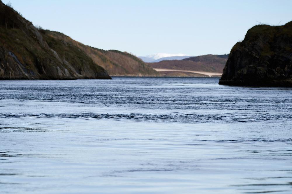 Sundstr&ouml;mmen<br /> Atlantic marine life, Bod&ouml;, Norway