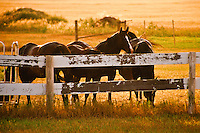 Horses standing at a corral fence