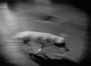 Mexican street dog roaming through the Oaxaca night, Mexico.