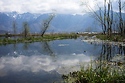 General views of the mountains and dead trees killed by the month-long floods on the Dal Lake, Srinagar, Jammu and Kashmir, India, on 25th March 2015. Nearly 2500 villagers including Srinagar, the capital of the state of Jammu and Kashmir, was devastated by severe floods and landslides in September 2014 the worst in 60 years, displacing millions of people, many of them children. Photo by Suzanne Lee for Save the Children