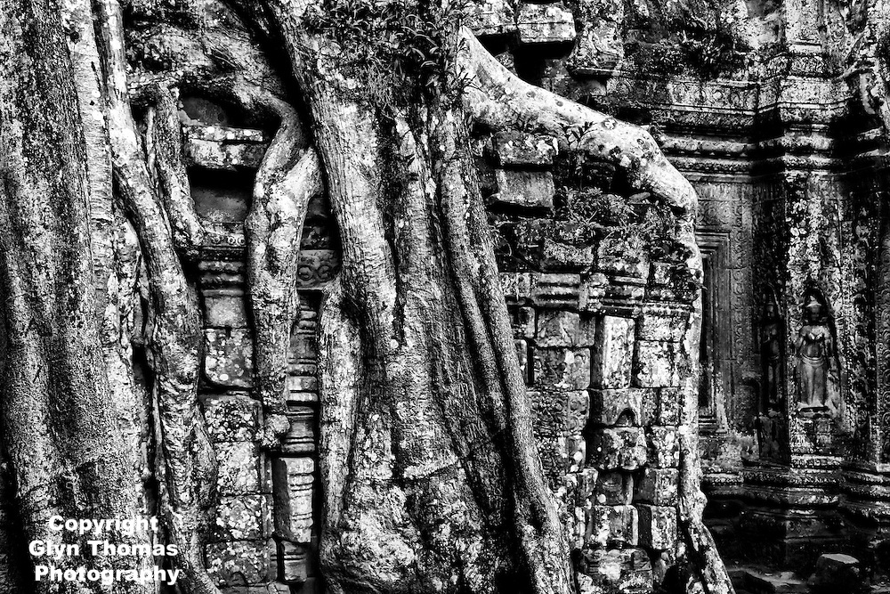 Ta Prohm temple overgrown with Strangler Fig tree roots at Angkor, Cambodia