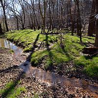 Newcombe Preserve 03 2015