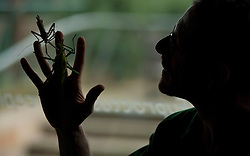 © Licensed to London News Pictures. 04/01/2012. LONDON, UK. Dave Clarke a zookeeper at London Zoo holds a pair of jungle nymph stick insects as part of the zoo's annual stock take today (04/01/12). There are more than 18,000 animals taking up residence at the Regent's Park site, and zookeepers have to make sure each and everyone is accounted for during the check. Photo credit: Matt Cetti-Roberts/LNP