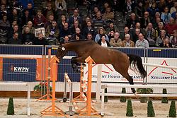 220 - Equus Tame<br /> KWPN Hengstenkeuring 2017<br /> © Dirk Caremans<br /> 01/02/2017