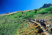 Horseback riding, Ruby Mountains, northeast Nevada USA
