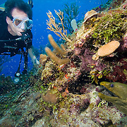 Lone male SCUBA diver looking at a Green moray eel(Gymnothorax funebris),with swarm of mysids on Belize Barrier Reef, South Water Caye Marine Reserve, Belize