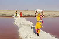 Inde, Rajasthan, mine de sel sur le lac salé de Sambhar. // India, Rajasthan, salt mine on the Sambhar salt lake.