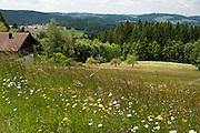 Landschaft, Blumenwiese, Bauernhaus bei Rattenberg, Vorderer Bayerischer Wald, Bayern, Deutschland | landscape near Rattenberg, Bavarian Forest, Bavaria, Germany