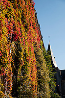 Ivy covered building near La Croix-Sonnet in Normandy, France