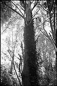 Trees, Eye Moor and Woodland, Suffolk 2011
