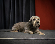 Sebastian in the studio for my Mixed breed project.