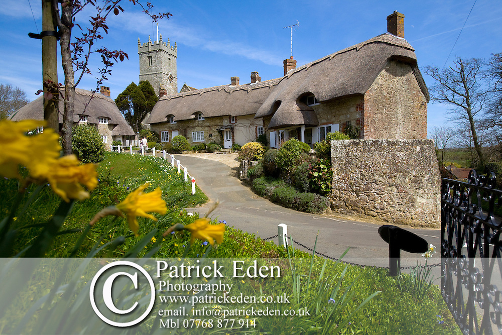 Thatched Cottages, Daffodils, Houses, Church, Godshill, Isle of Wight, England, UK Photographs of the Isle of Wight by photographer Patrick Eden photography photograph canvas canvases