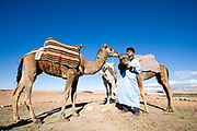a man with his camels in morocco in the atlas mountains