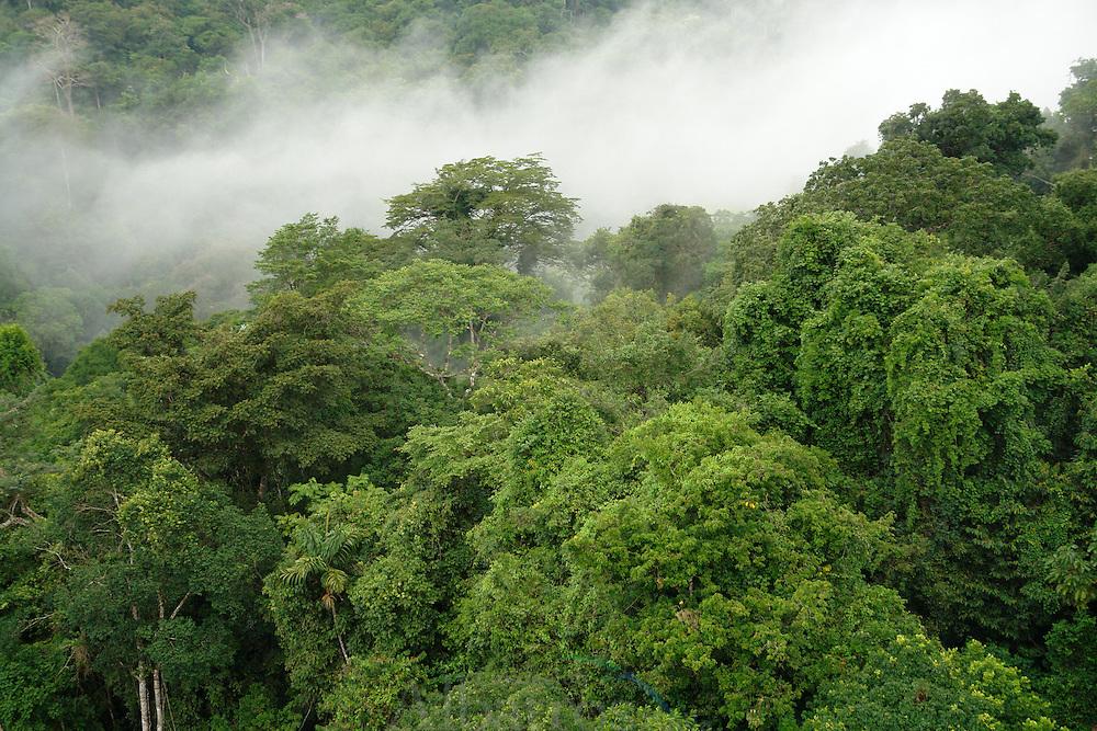 El r&iacute;o Chagres se localiza al oriente de Panam&aacute;. En su curso medio se encuentra la represa de Gat&uacute;n, con la cual se form&oacute; el lago artificial Gat&uacute;n, que conforma el canal de Panam&aacute;. Desemboca al noroeste en el mar Caribe.<br /> <br /> Fue descubierto en 1502 por Crist&oacute;bal Col&oacute;n, quien le dio el nombre de R&iacute;o de los lagartos por los cocodrilos que all&iacute; encontr&oacute;. <br /> <br /> Su cuenca est&aacute; cubierta por espesos bosques tropicales.<br /> <br /> En su cauce se transportaron mercanc&iacute;as que ven&iacute;an de la ciudad de Panam&aacute; a pie llegando al poblado ribere&ntilde;o de Cruces y se navegaba por el r&iacute;o Chagres hasta su desembocadura. En sus inmediaciones se cre&oacute; en 1985 el Parque Nacional Chagres, un espacio natural protegido de 129.000 hect&aacute;reas.<br /> &copy;Alejandro Balaguer/Fundaci&oacute;n Albatros Media.