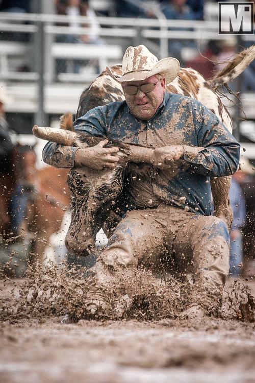 CJ Urbanek wrestles his steer at the 2005 Cheyenne Frontier Days Rodeo in Cheyenne, WY on July 26, 2005.