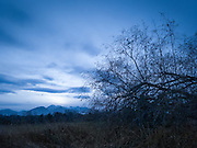Winter dusk and fallen tree, and the Olympic mountains.