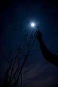 Moon, arm and plant. Copyright 2006 Lance Cheung