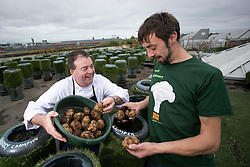Repro Free: 08/10/2013 Pádriac Óg Gallagher is pictured harvesting his lumper potatoes at the Urban Farm ahead of the re launch of the Boxty House, Temple Bar pictured with Urban Farm founder Andrew Douglas. The restaurant has seen a complete re-branding giving a relaxed contemporary fell to this iconic Irish eatery. Picture Andres Poveda