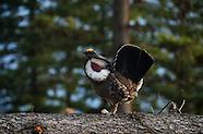 Yaak Montana Wildlife
