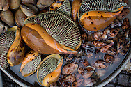conch, sea snails and clams, duong dong morning market