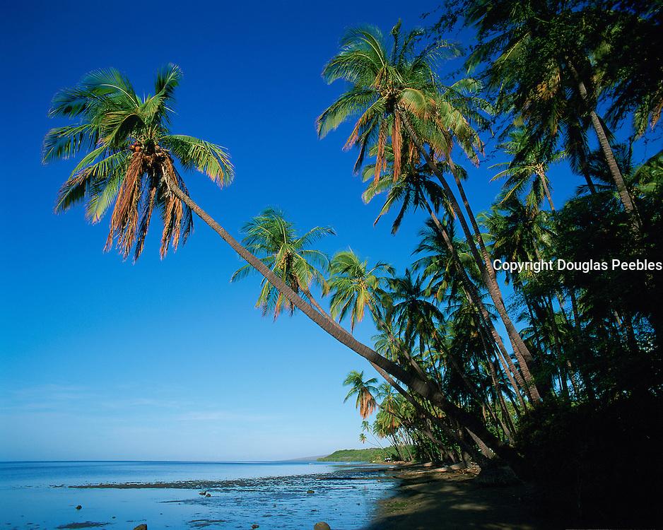 Kapuaiwa Coconut Grove, Molokai, Hawaii, USA<br />