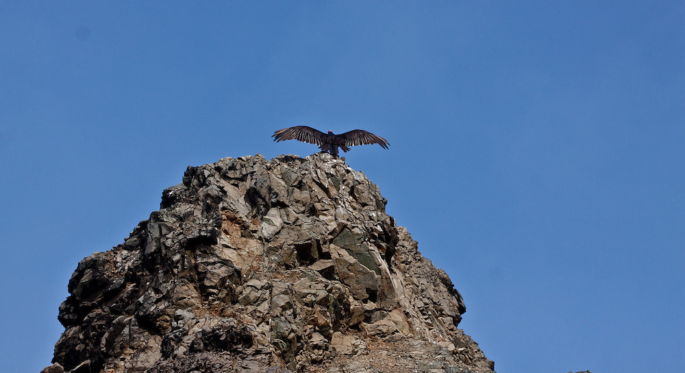 Shots of Birds and Wild animals, in Los Angeles, and Lima, Peru