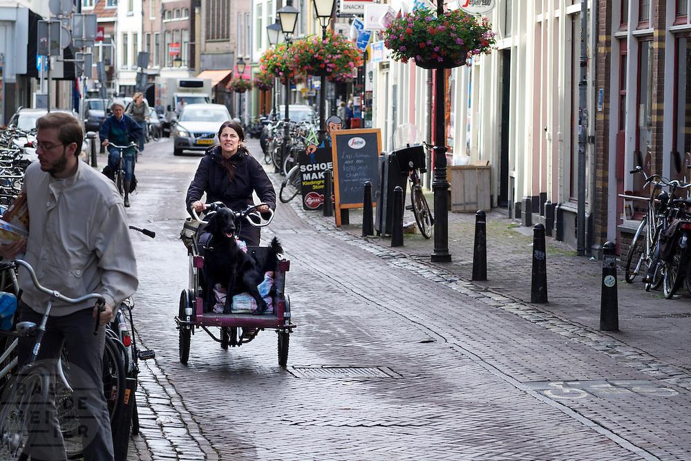 In Utrecht neemt een vrouw haar hond mee in de bakfiets.<br /> <br /> In Utrecht a woman takes her dog in a cargo bike.