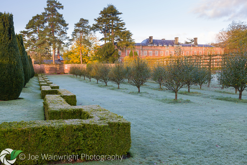 A clipped box hedge and lawns are covered in frost, beyond are fruit trees and the house at Erddig Hall, Wrexham