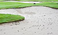 LEGEMEER - Dennenappels in de bunker; BurgGolf golfbaan St. Nicolaasga. COPYRIGHT KOEN SUYK