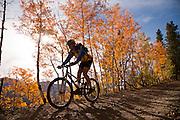 Mountain Biker (MR) riding through aspen grove near Breckenridge, Summit County, Colorado