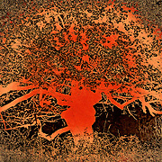 """Tree of Life in Orange"" <br />