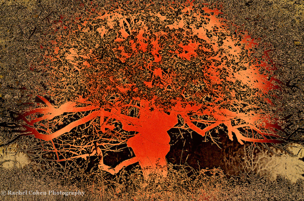 &quot;Tree of Life in Orange&quot; <br />