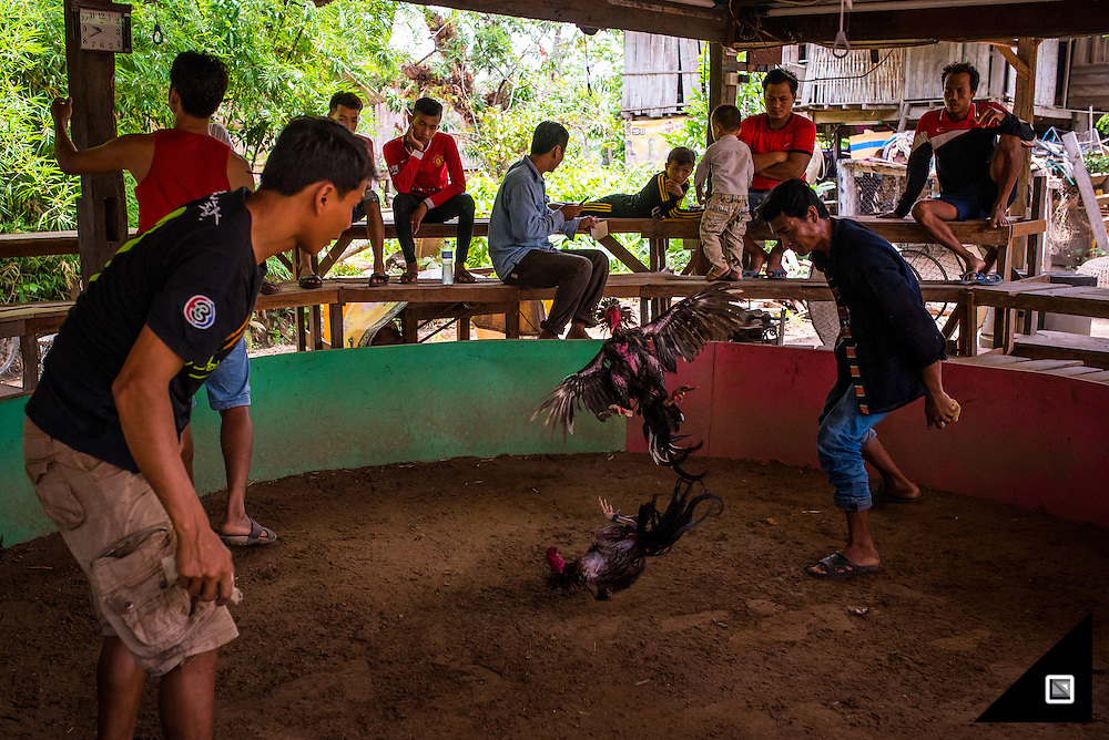 Asia, Southeast Asia, Lao, Laos, Chicken Fights, Culture
