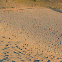 Huge sand dunes, with sunset light. Near Provincetown, Massachusetts, and part of Cape Cod National Seashore