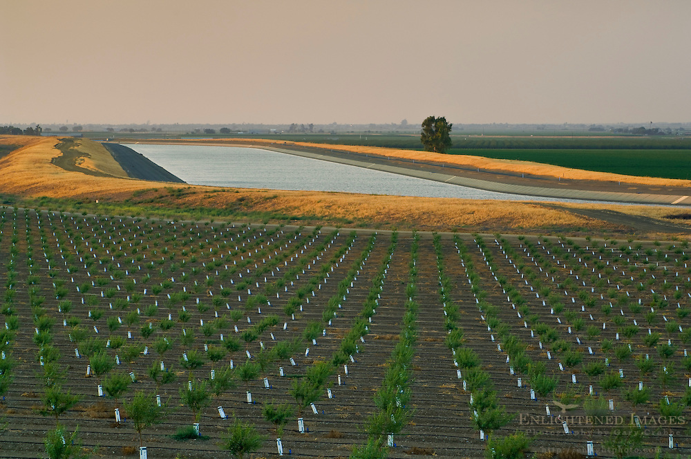 Newly planted crops in field next to the California Aquaduct at sunset in the Central Valley, Merced County,California