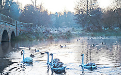 ©Licensed to London News Pictures 04/12/2019.<br /> Sidcup,UK. Swans on the River Cray. The Met office has issued a cold weather warning as air from the Arctic will see temperatures in the UK drop this week. The freezing cold weather conditions this morning at Footscray Meadows in Sidcup, South East London. Photo credit: Grant Falvey/LNP