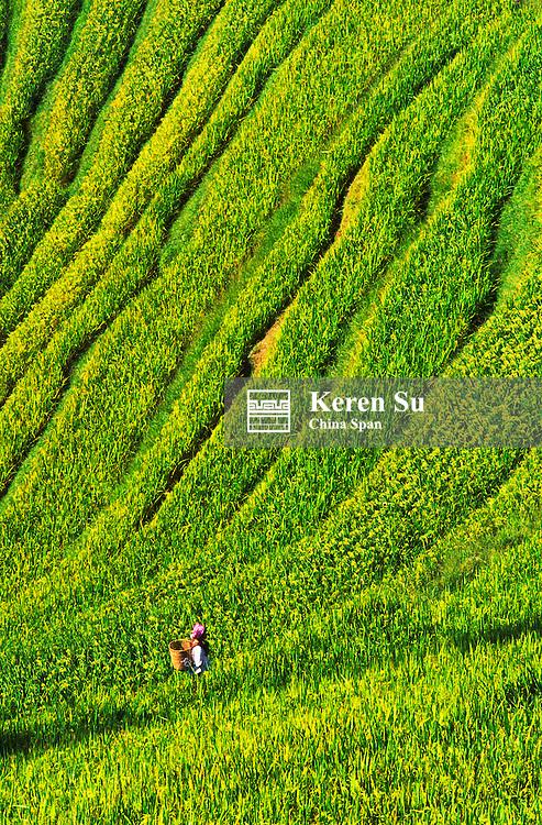 Zhuang ethnic minority girl on the terraced rice paddies, Longsheng, Guangxi Province, China