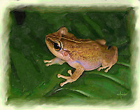 Puerto Rico's endemic frog painting