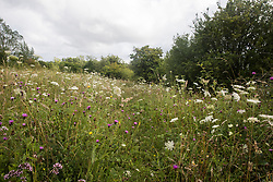 Wild flowers grow at Calvert Jubilee Nature Reserve on 27 July 2020 in Calvert, United Kingdom. On 22nd July, the Berks, Bucks and Oxon Wildlife Trust (BBOWT) reported that it had been informed of HS2's intention to take possession of part of Calvert Jubilee nature reserve, which is home to bittern, breeding tern and some of the UK's rarest butterflies, on 28th July to undertake unspecified clearance works in connection with the high-speed rail link.